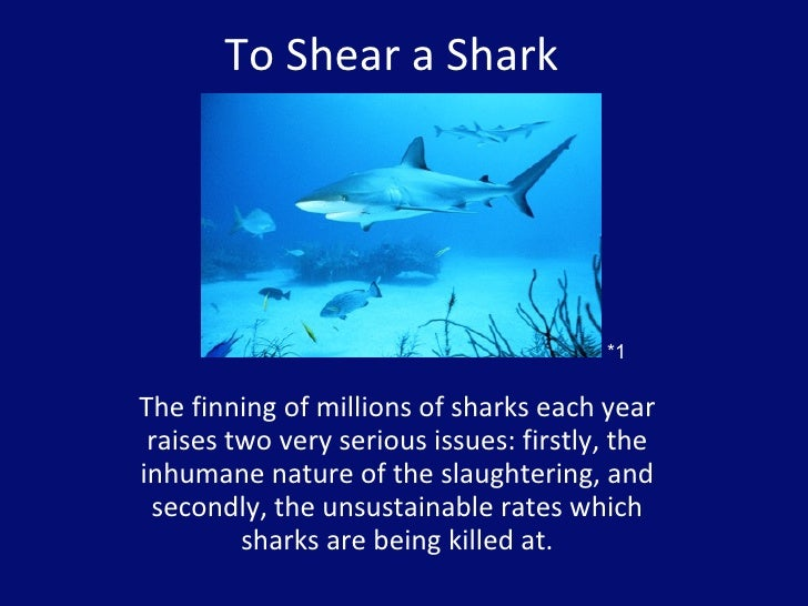 To Shear a Shark  The finning of millions of sharks each year raises two very serious issues: firstly, the inhumane nature...