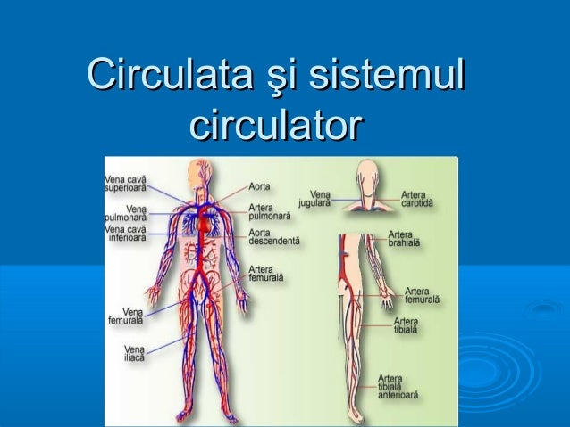 Circulata şi sistemul     circulator