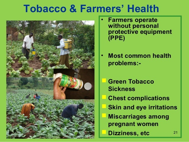 Tobacco To Bamboo Research Project In South Nyanza In