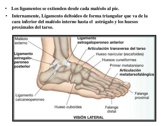 adoración del pie interno