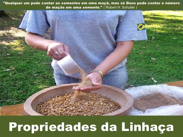 """Propriedades da Linhaça """"Qualquer um pode contar as  sementes  em uma maçã, mas só Deus pode contar o número de maçãs..."""