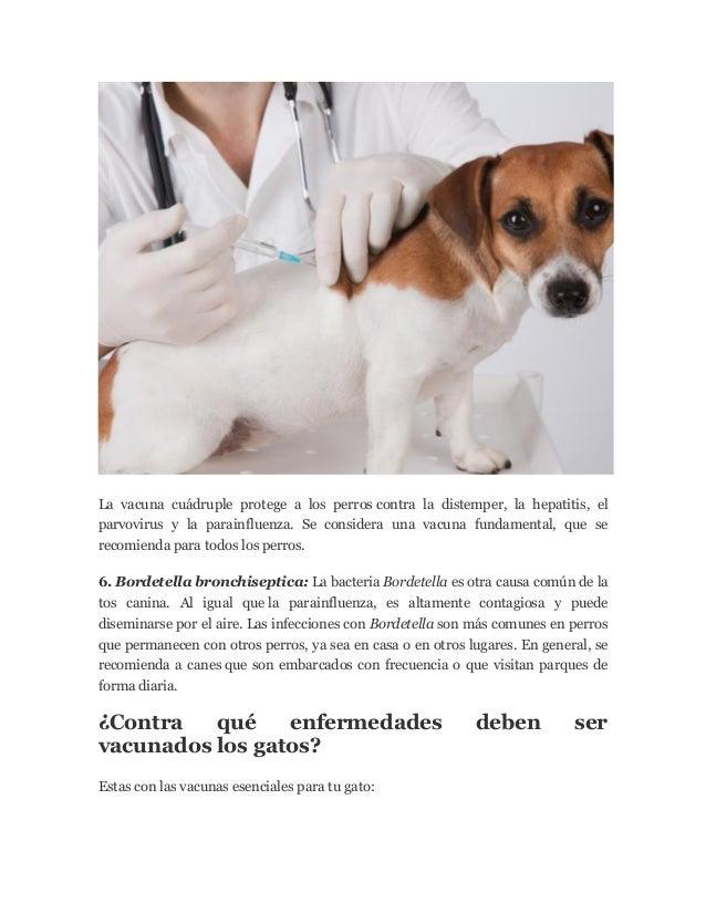Toda la informacion sobre vacunas para perros for Informacion sobre los arquitectos