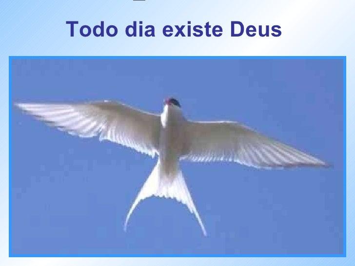 Todo dia existe Deus