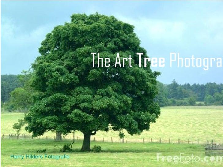 The Art Tree PhotograpHarry Hilders Fotografie