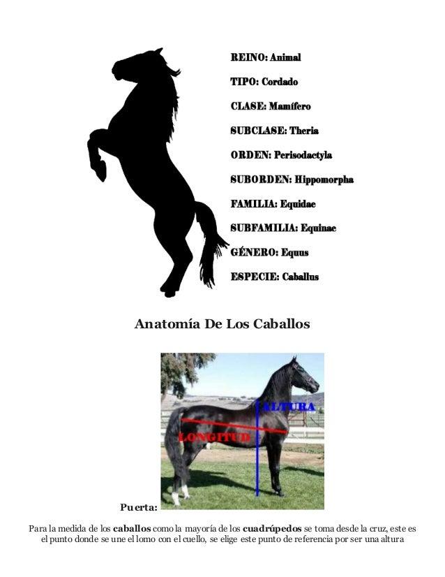Todo lo que debes saber sobre caballos