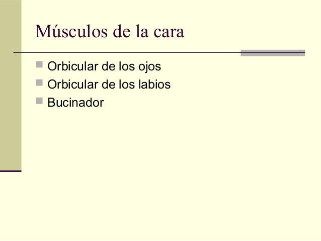 Todos los musculos for Esternohioideo y esternotiroideo