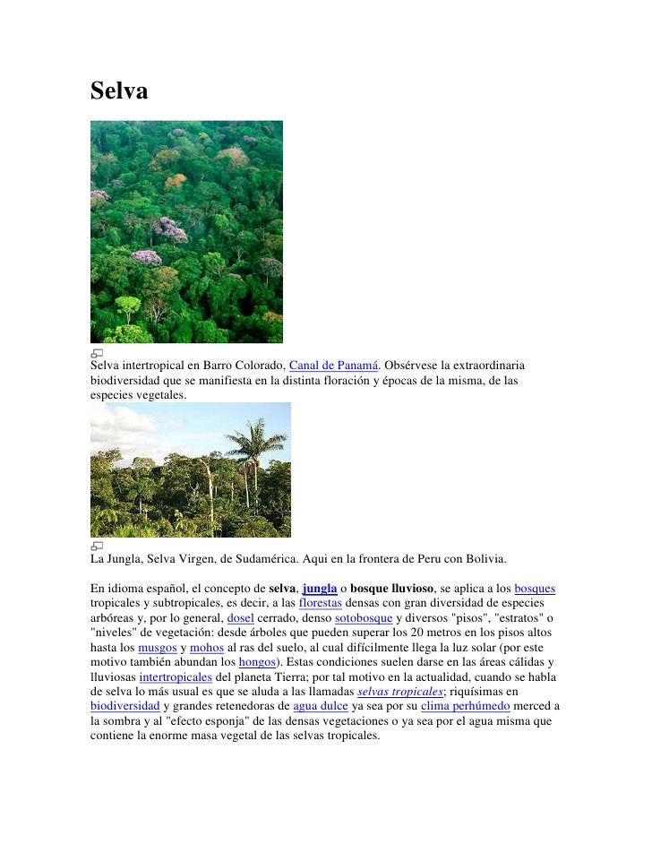 SelvaSelva intertropical en Barro Colorado, Canal de Panamá. Obsérvese la extraordinariabiodiversidad que se manifiesta en...