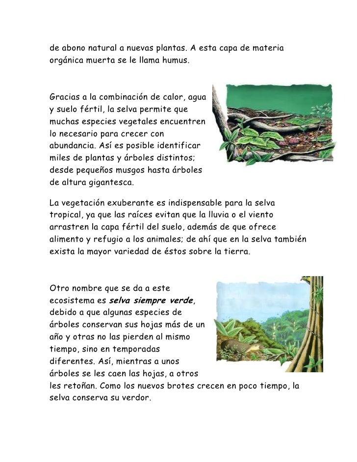 Todo sobre las selvas bosques for Informacion sobre el suelo
