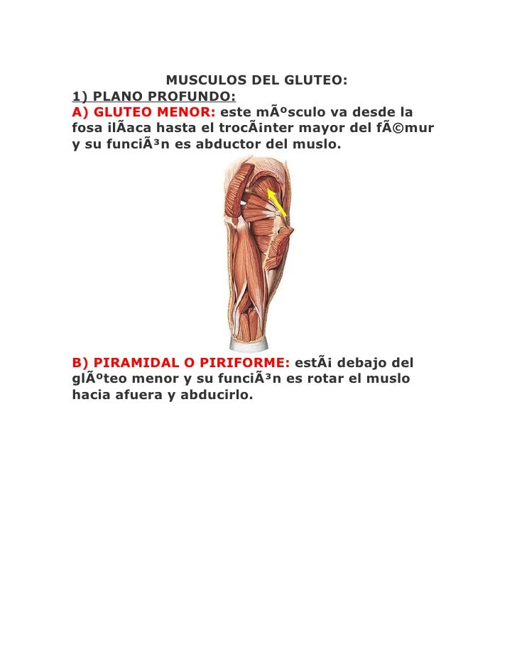 MUSCULOS DEL GLUTEO: 1) PLANO PROFUNDO: A) GLUTEO MENOR: este músculo va desde la fosa ilÃaca hasta el trocánter mayor d...