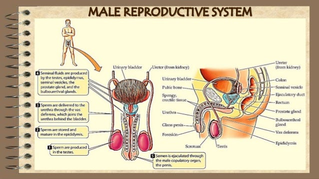 low testosterone causes women
