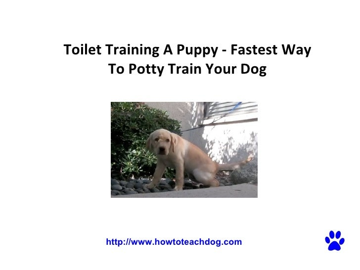 Toilet Training A Puppy - Fastest Way To Potty Train Your Dog   http://www.howtoteachdog.com
