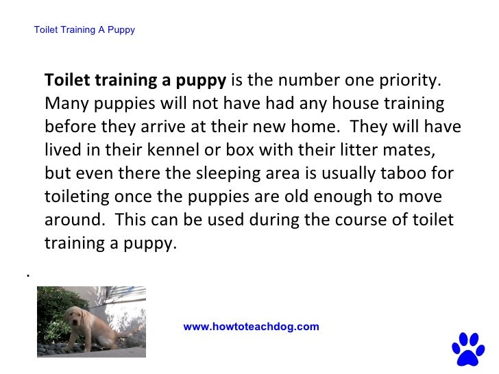 Toilet Training A Puppy   Fastest Way To Potty Train Your Dog  Http://www.howtoteachdog.com; 2.