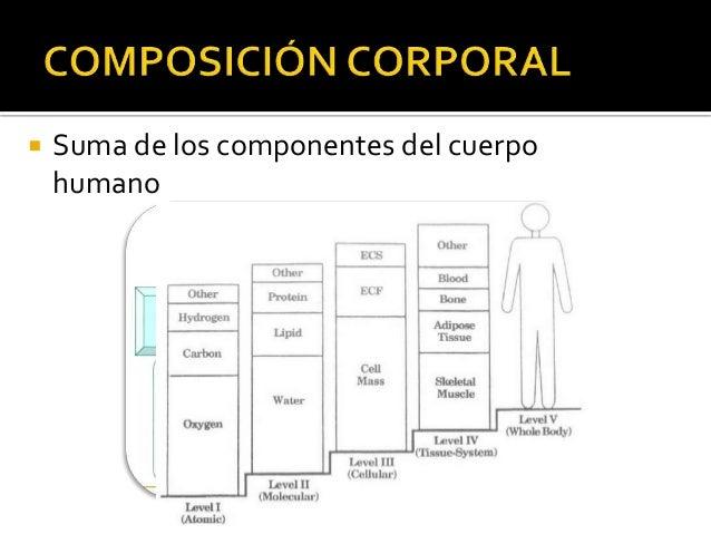 Antropometría. Método ISAK Slide 3