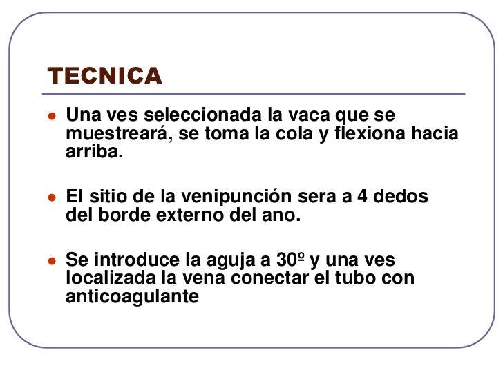 Venas: Satélites de las arterias y paralelas. Existen dos venas coccígeas medias.<br />Nervios: Hacia la base de la cola h...