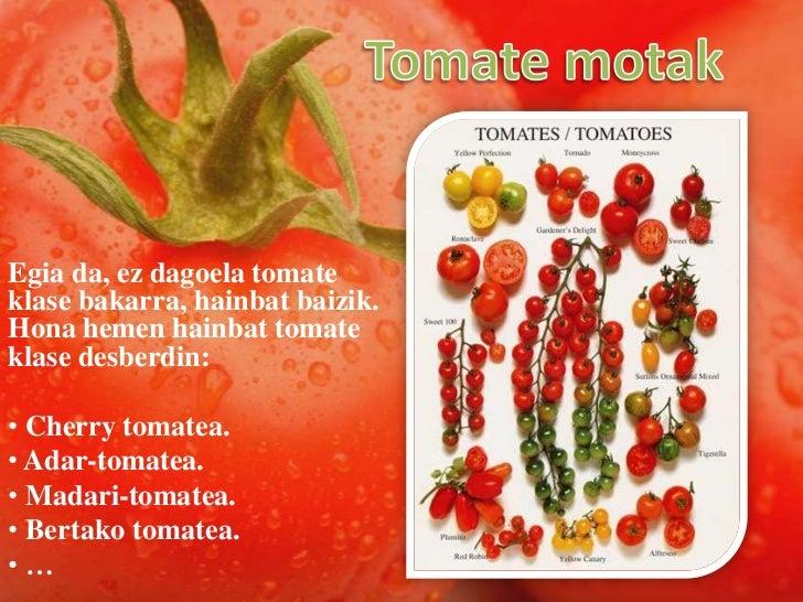 Tomate motak<br />Egia da, ez dagoela tomate klase bakarra, hainbat baizik. Hona hemen hainbat tomate klase desberdin:<br ...