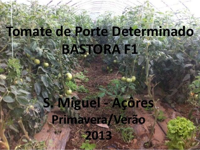 Tomate de Porte Determinado BASTORA F1  S. Miguel - Açôres Primavera/Verão 2013