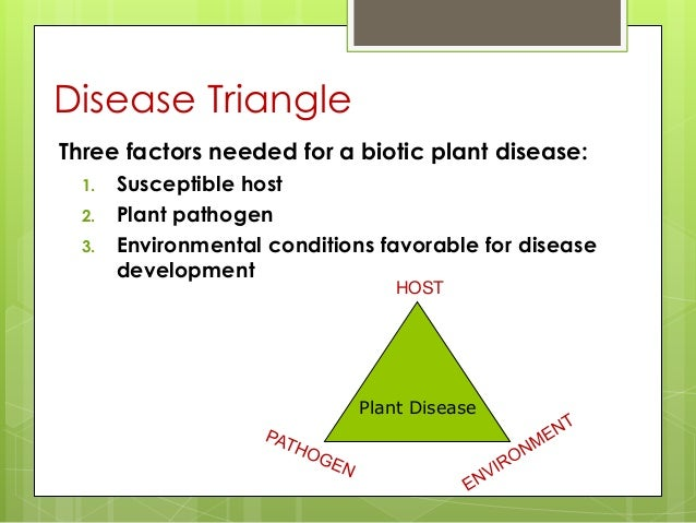 plant diseases and its causative agents essay Plant diseases have several causative agents this would include fungi, bacteria, virus, and parasitic causal agents (lecture notes in plant pathology, 2000) for the purpose of this paper, it is the aim of the author to present examples of plant diseases, which have been primarily caused by fungi, bacteria, and viroids.