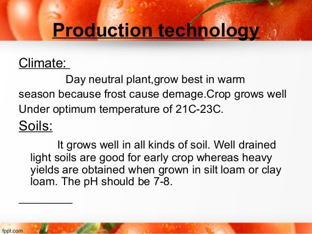 Tomato ppt for Soil in sentence