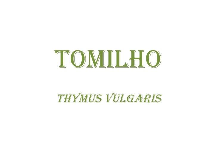 TOMILHO Thymus vulgaris