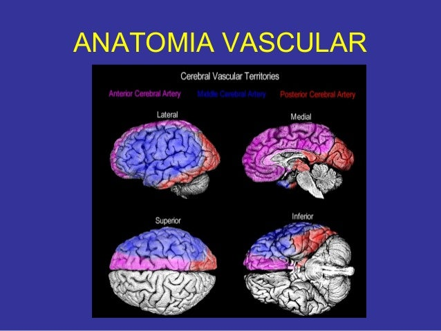 Tomografia de cerebral