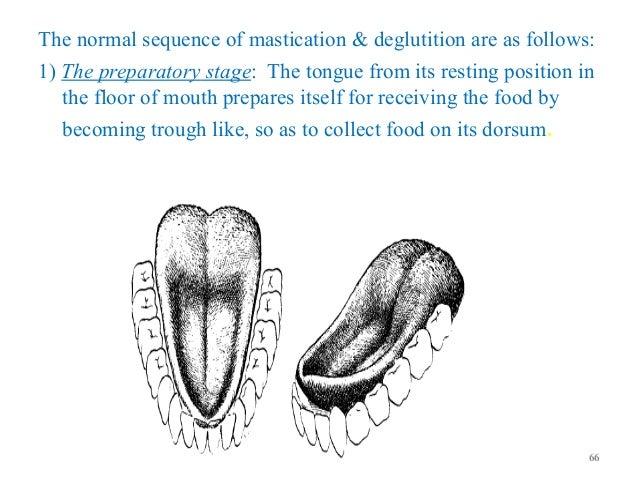 Tongue anatomy & diseases
