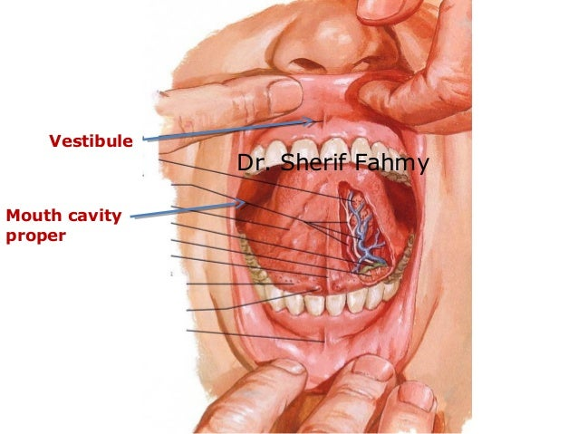 Oral Cavity & The Tongue (Anatomy of the Neck)