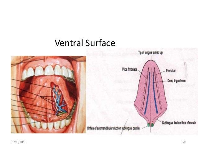 Tongue patwal