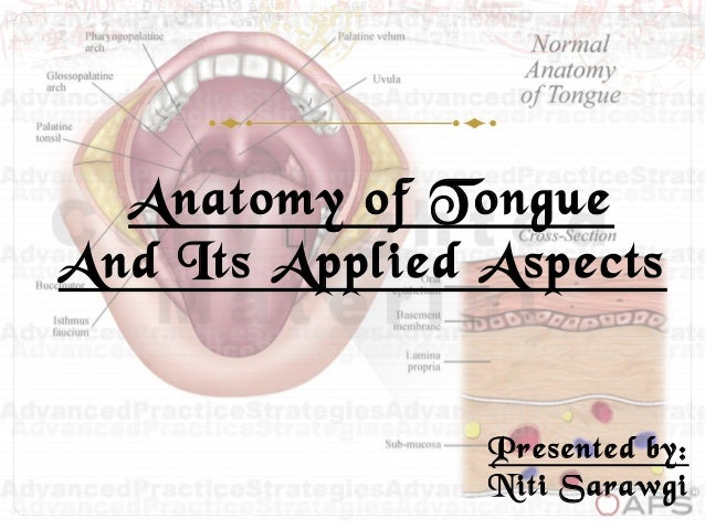 Anatomy of Tongue And Its Applied Aspects Presented by: Niti Sarawgi