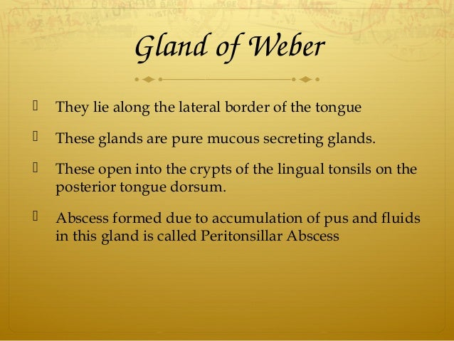GlandofWeber  They lie along the lateral border of the tongue  These glands are pure mucous secreting glands.  These ...