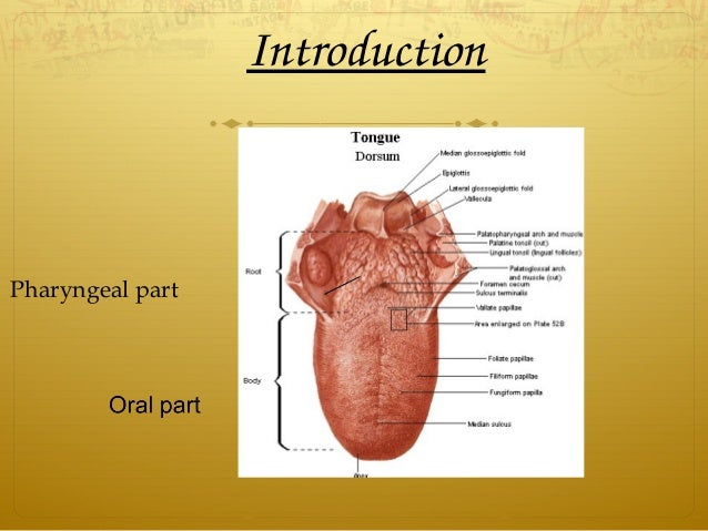 Introduction Pharyngeal part
