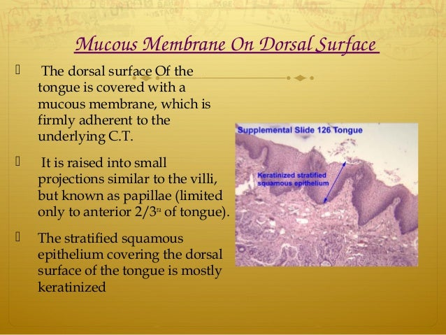 MucousMembraneOnDorsalSurface  The dorsal surface Of the tongue is covered with a mucous membrane, which is firmly a...