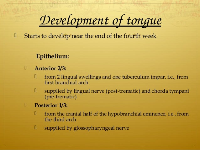 Developmentoftongue  Starts to develop near the end of the fourth week Epithelium:  Anterior 2/3:  from 2 lingual swe...