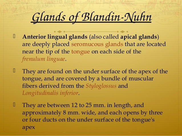 GlandsofBlandinNuhn  Anterior lingual glands (also called apical glands) are deeply placed seromucous glands that are ...