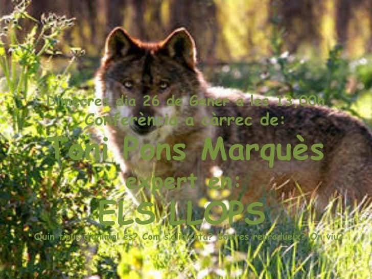 Dimecres dia 26 de Gener a les 13,00h  Conferència a càrrec de:  Toni Pons Marquès   expert en:  ELS LLOPS  Quin tipus d'a...