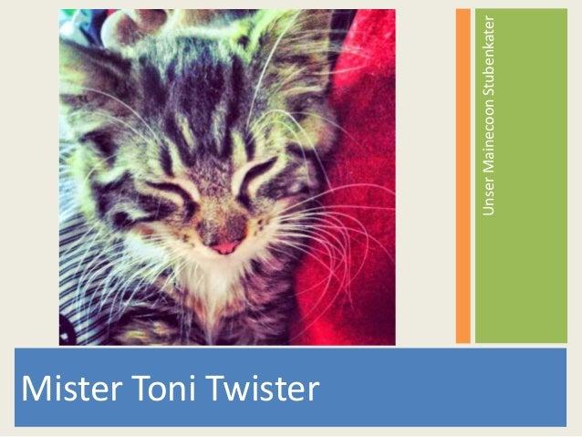 Mister Toni Twister UnserMainecoonStubenkater