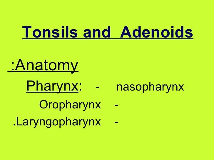 Tonsils and  Adenoids   Anatomy:   Pharynx :   -  nasopharynx  -  Oropharynx  -  Laryngopharynx.