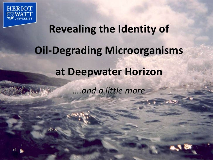 Revealing the Identity ofOil-Degrading Microorganisms   at Deepwater Horizon       ….and a little more