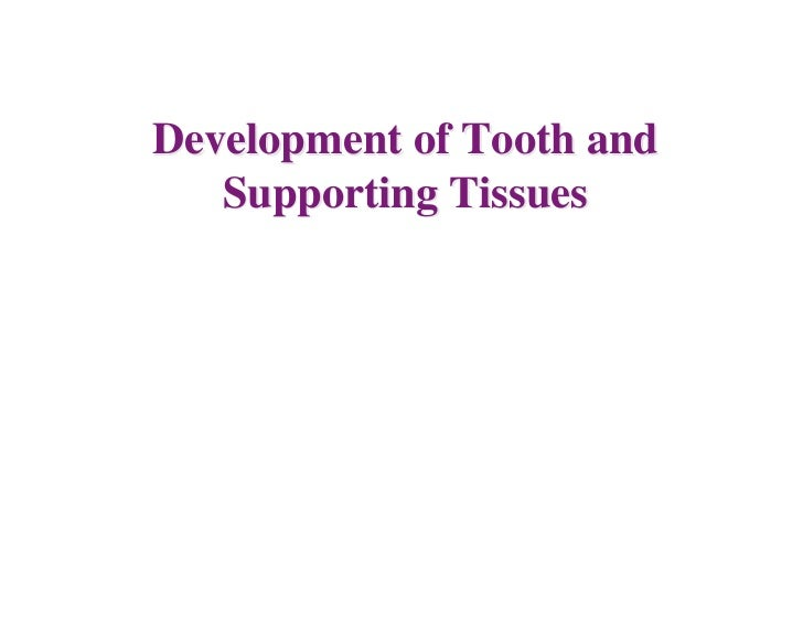 Development of Tooth and   Supporting Tissues