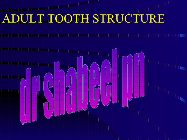 ADULT TOOTH STRUCTURE dr shabeel pn