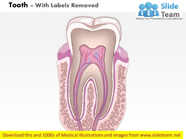 Diagram of tooth no labels electrical work wiring diagram ccuart Gallery