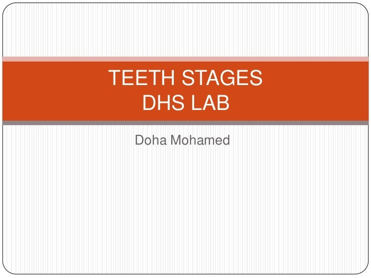 TEETH STAGES   DHS LAB  Doha Mohamed