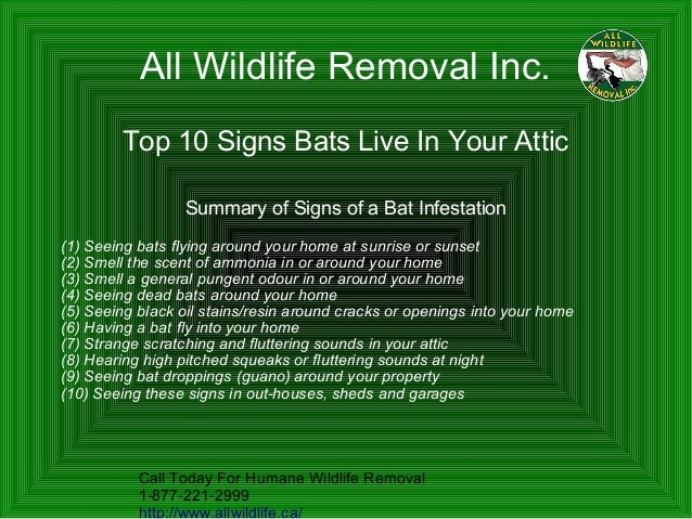 Top 10 Signs You Have Bats In Your Attic