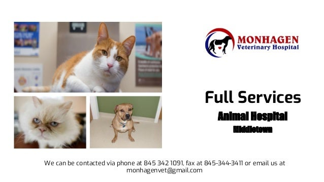 Full Services Animal Hospital Middletown We can be contacted via phone at 845 342 1091, fax at 845-344-3411 or email us at...