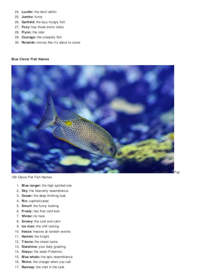 Top 100 clever pet fish names cute nicknames