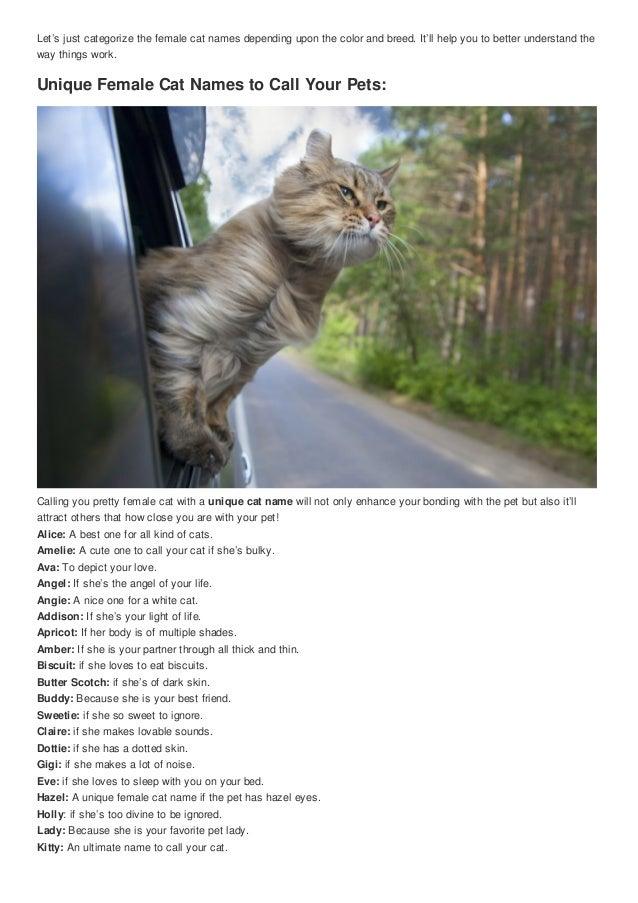 Top 100 funniest cute female cat nicknames cute nicknames