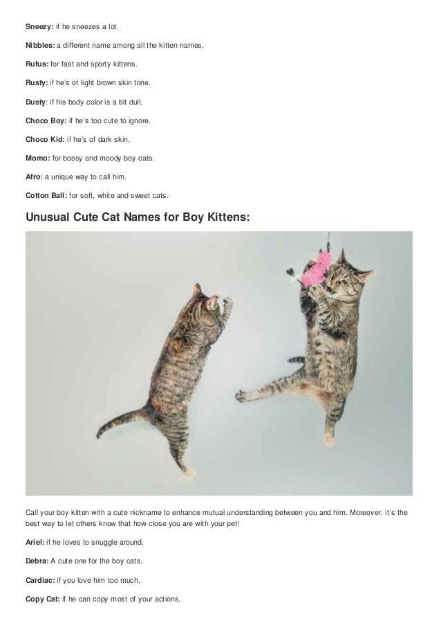 Top 100 lovable cute boy cat nicknames cute nicknames
