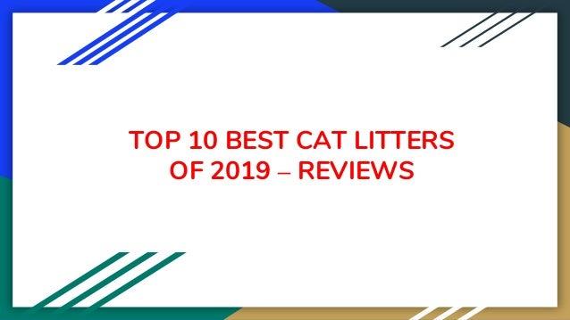 TOP 10 BEST CAT LITTERS OF 2019 – REVIEWS
