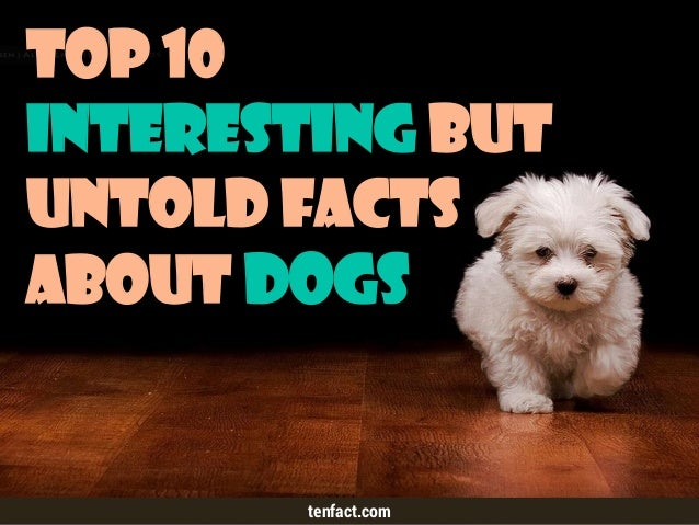 Top 10 Interesting but Untold Facts about Dogs tenfact.com