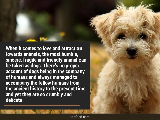 Top 10 Interesting but Untold Facts about Dogs