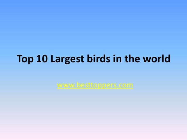 Top 10 Largest birds in the world www.besttoppers.com